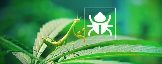 Bichos E Insectos Molestos