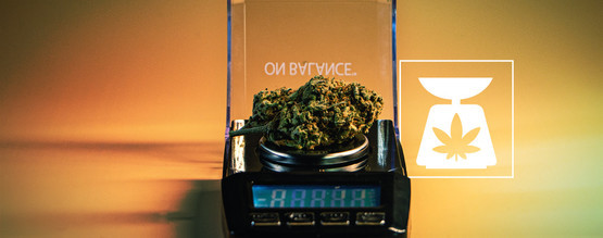 Pesos De La Marihuana: Todo Lo Que Debes Saber