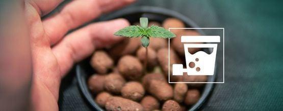 Cómo Cultivar Cosechas Enormes De Marihuana Con El Sistema Hidropónico DWC