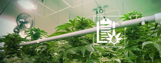Diferentes Tipos De Sistemas Hidropónicos Para Cultivar Marihuana