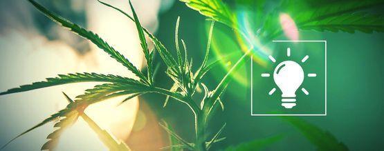 Elige La Luz Adecuada Para Tu Cultivo De Cannabis