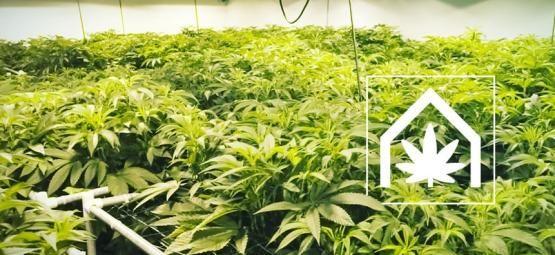 Cómo Crear Y Mantener El Espacio De Cultivo De Marihuana Definitivo
