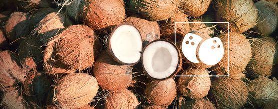 Todo Lo Que Necesitas Saber Sobre El Cultivo De Cannabis En Coco