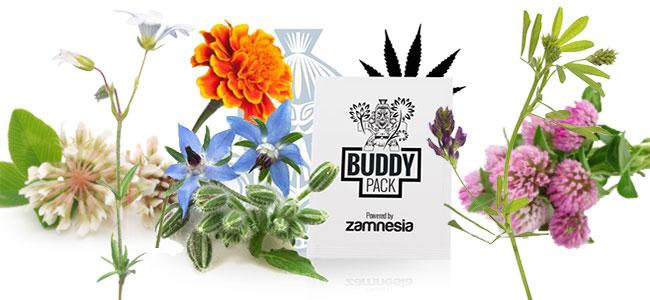 Compañero de Cannabis nurture