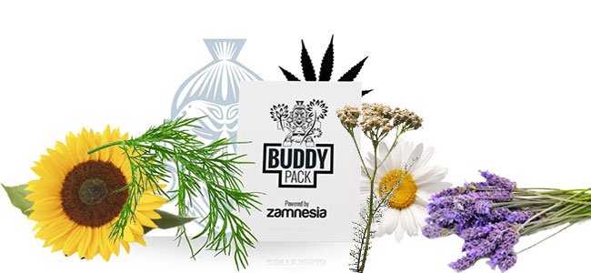 El compañero de cannabis atrae insectos