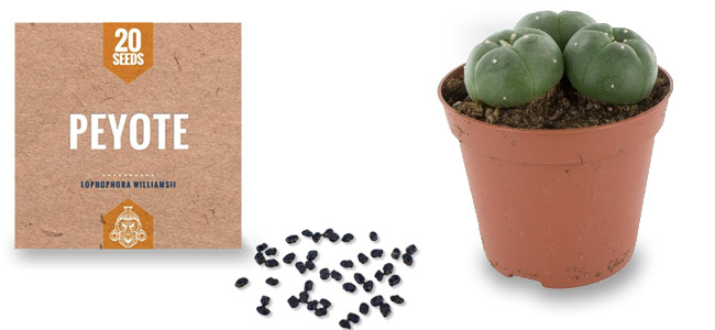 Semillas de Peyote