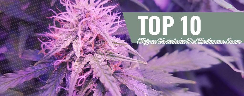 Las 10 Mejores Variedades De Marihuana Suave