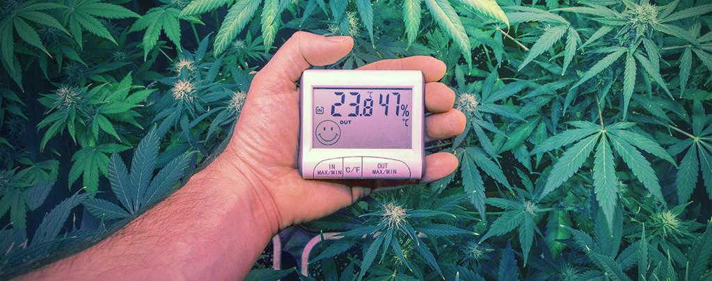 Las temperaturas ideales para cultivar marihuana