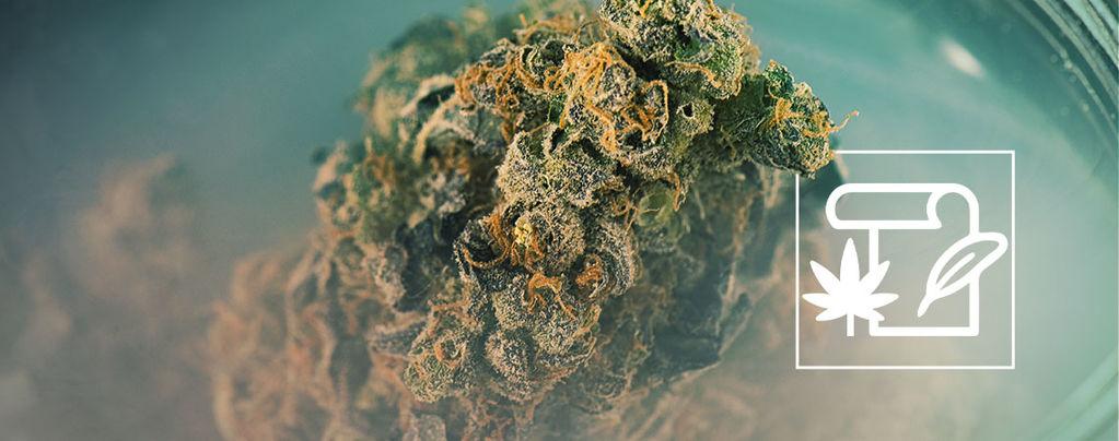 Skunk marihuana
