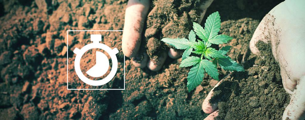 Cultiver Marihuana