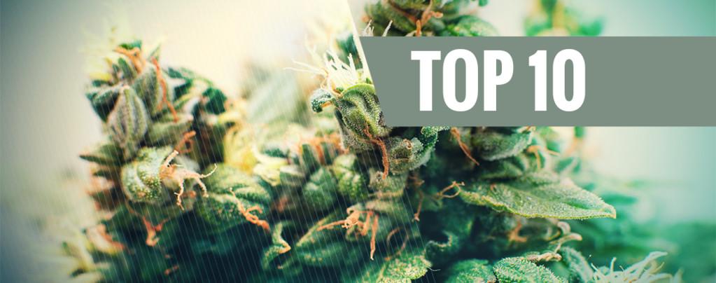 Top 10 Semillas De Marihuana Autofloreciente