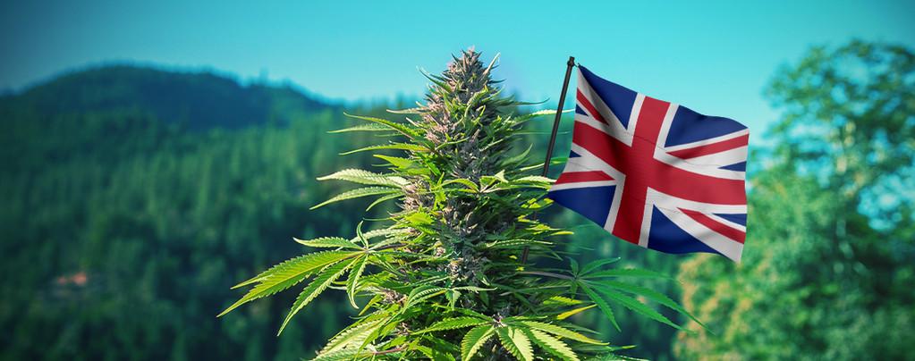 Mejores semillas de cannabis Reino Unido