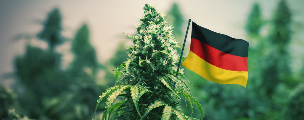 Las mejores variedades de marihuana para cultivar en exterior en Alemania