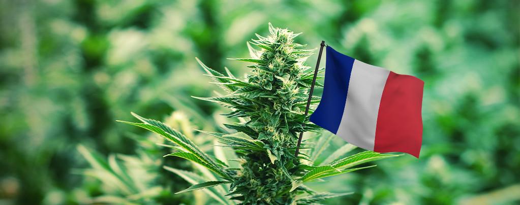 Mejores Variedades De Exterior En France