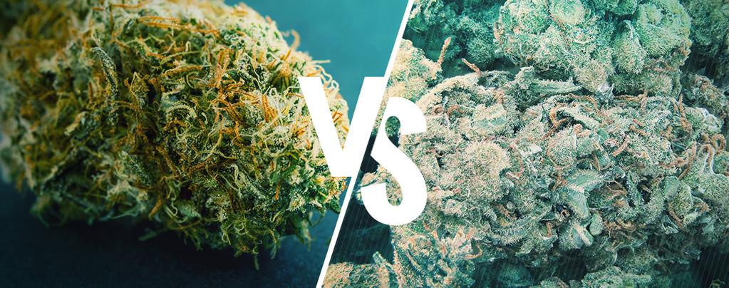 Marihuana buena vs mala