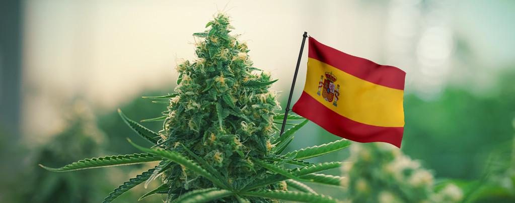Mejores Variedades De Cannabis España
