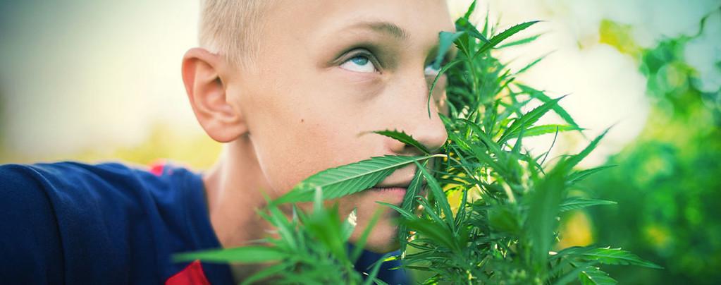 colocarte cannabis