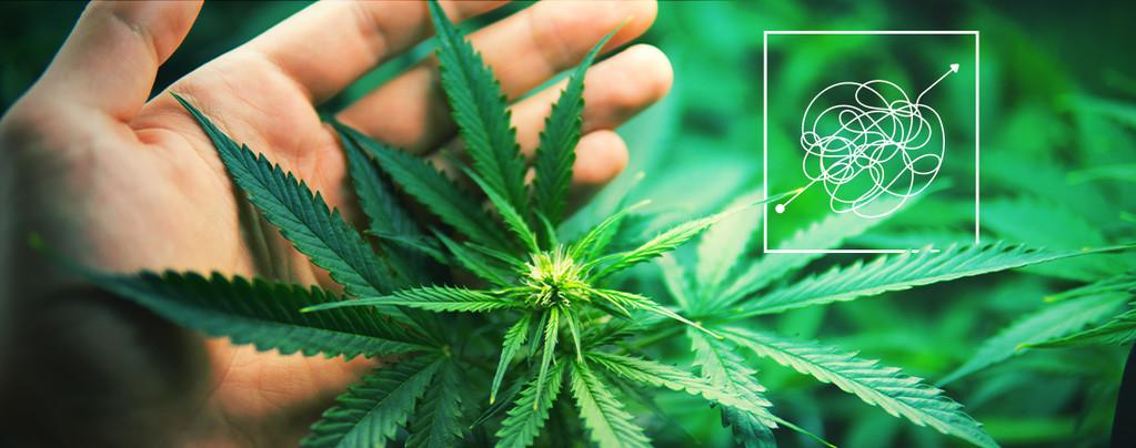 Variedades De Cannabis Más Difíciles