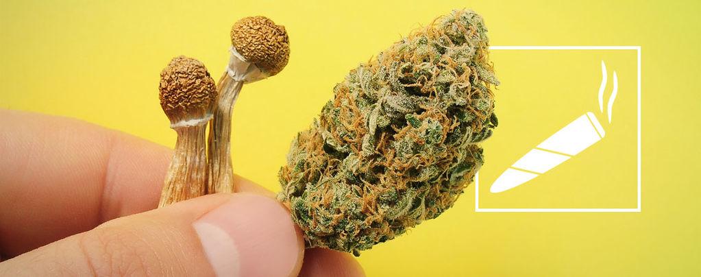 Fumar Setas Alucinógenas
