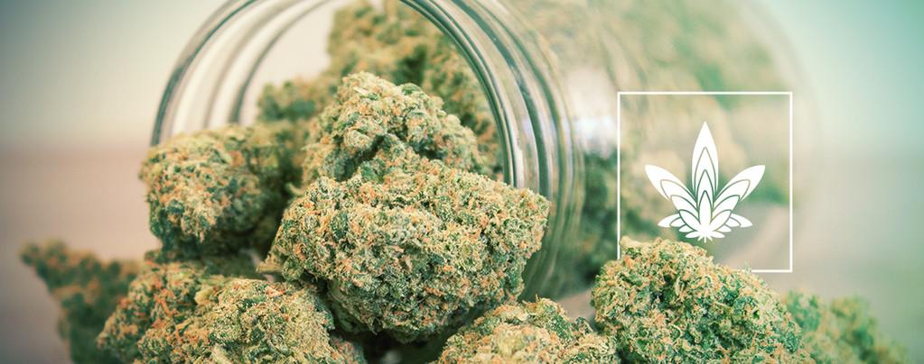 Cannabis Cogollos Descomunales
