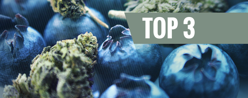 Marihuana Blueberry