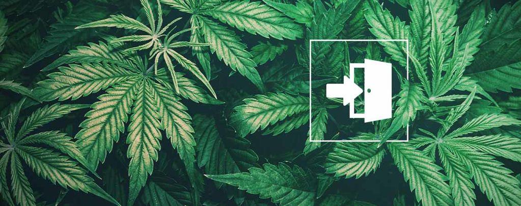 Las Mejores Semillas De Cannabis Para El Cultivo En Interiores