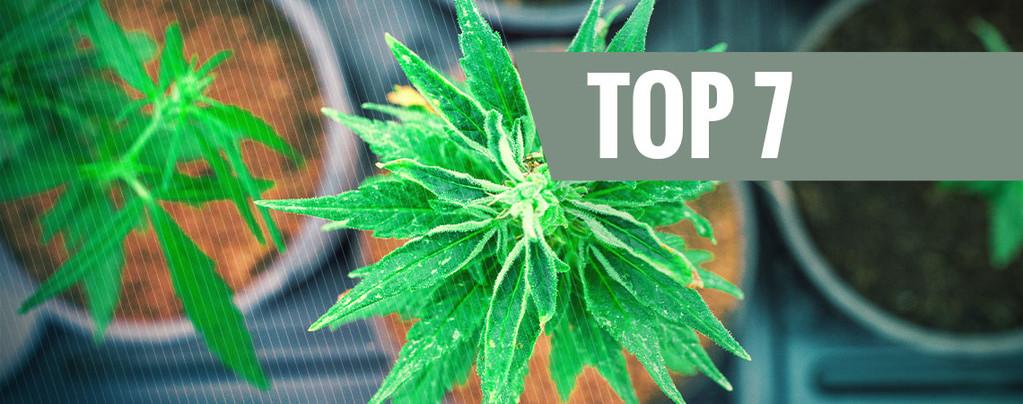 Marihuana Con Ratios THC:CBD Únicos