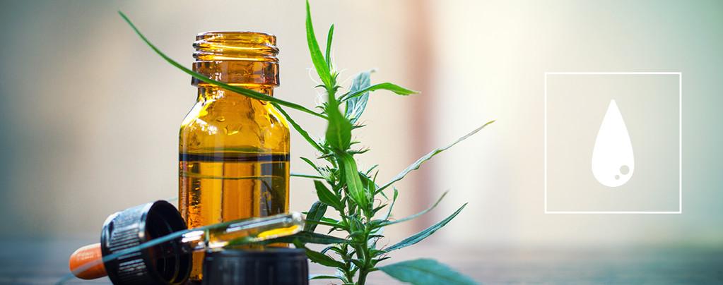 La Guía Definitiva Para Consumir Concentrados De Cannabis