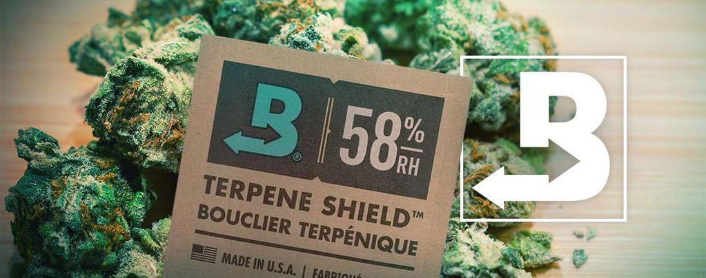 Mantener Tu Marihuana Súper Fresca Con Boveda