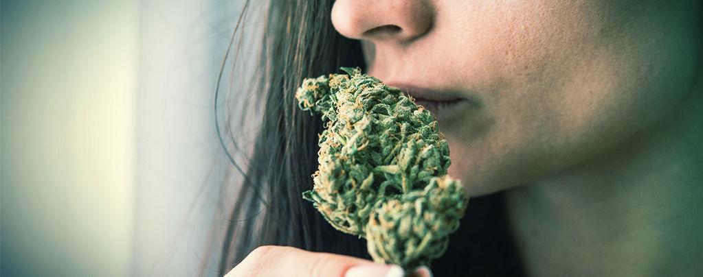 Eliminar El Olor A Marihuana
