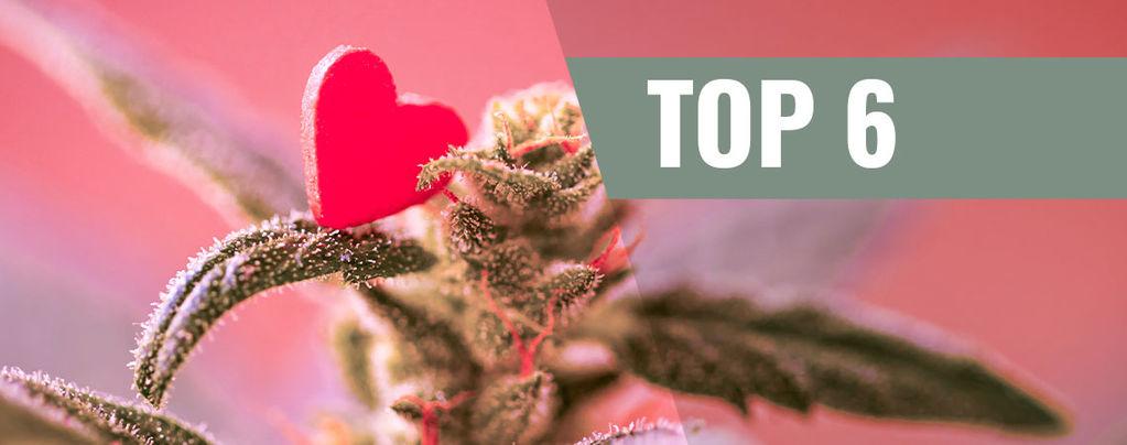 Variedades De Cannabis Para El Día De San Valentín
