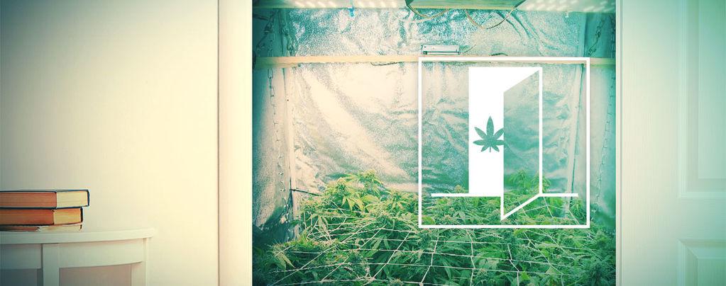 Cómo Cultivar Marihuana En Tu Armario