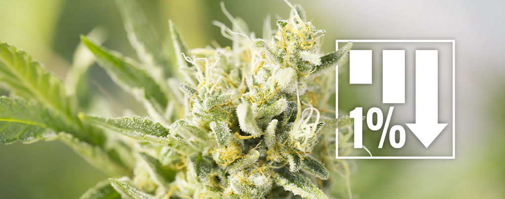 Variedades de Cannabis Menos 1% THC