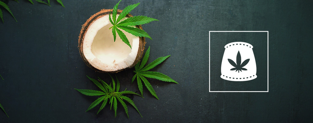 Agua De Coco Como Fertilizante Orgánico Para Cannabis