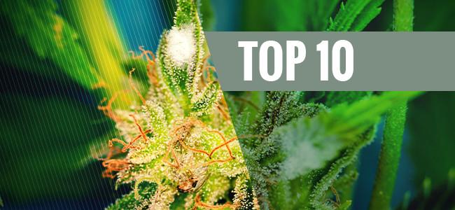 Top 10 De Variedades Resistentes Al Moho