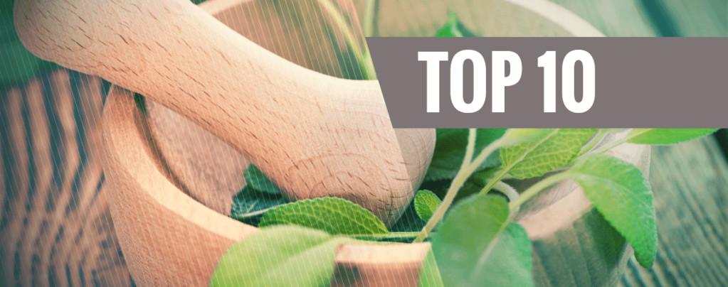 Los 10 Mejores Enteógenos