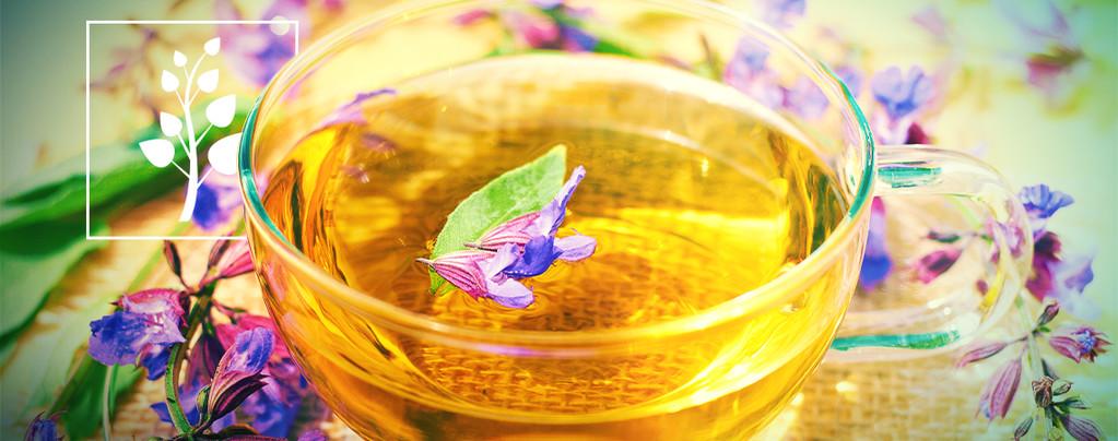 Té De Salvia Divinorum