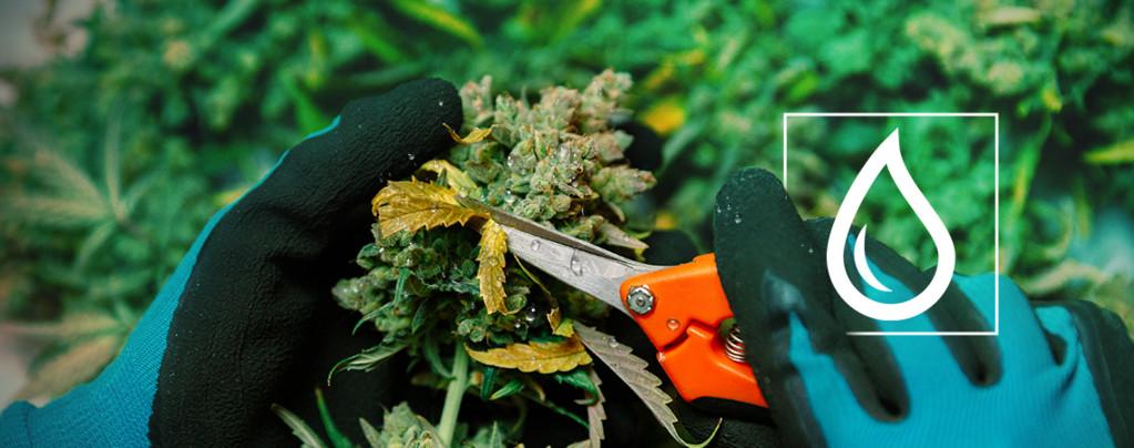 Se Moja Marihuana