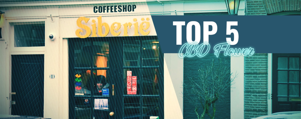 Los 5 Mejores Coffeeshops Con Hierba Rica En CBD