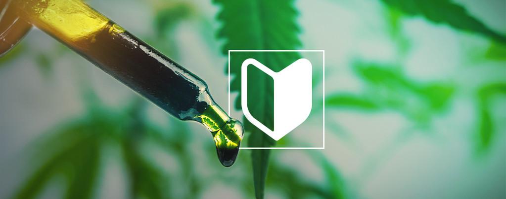 Cannabis Perfectos Para Principiantes
