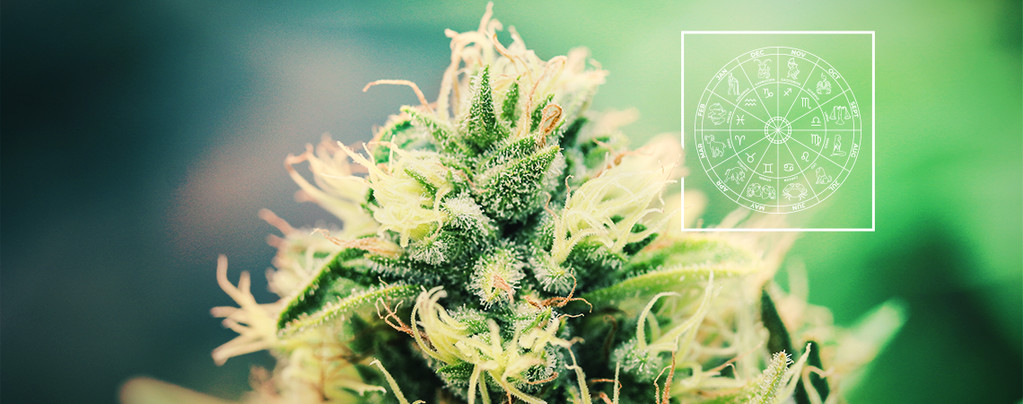 La Variedad De Cannabis Perfecta Para Cada Signo Del Zodiaco