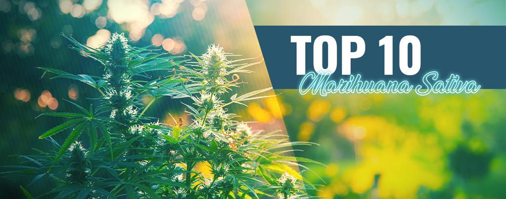Top 10 De La Mejor Marihuana Sativa En Ámsterdam