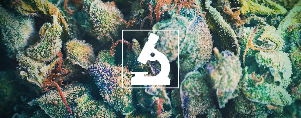 Ventajas De Los Microscopios Para Cultivadores Y Fumetas