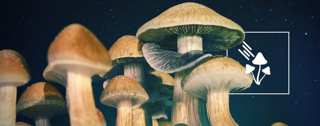 Cuánta Luz Necesitan Las Setas Mágicas Para Crecer