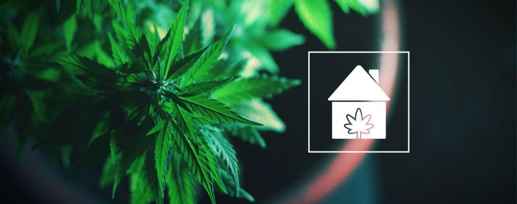 Cultivar Cannabis Casa