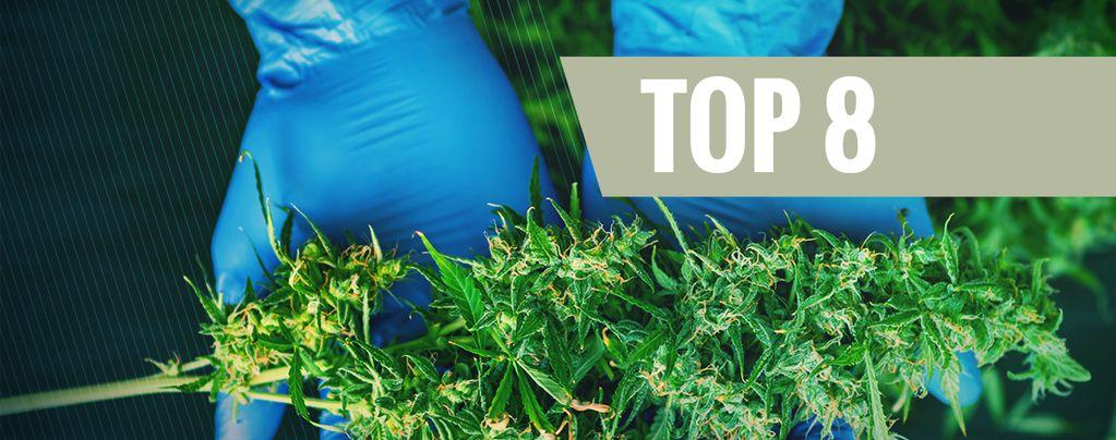 8 Herramientas Indispensables Para Cosechar Marihuana