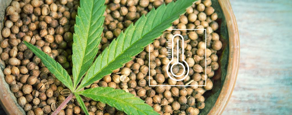 Semillas De Cannabis Para Cultivo En Exterior