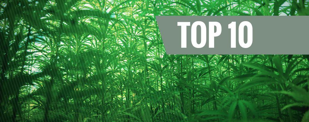 Las 10 Variedades De Marihuana Más Altas