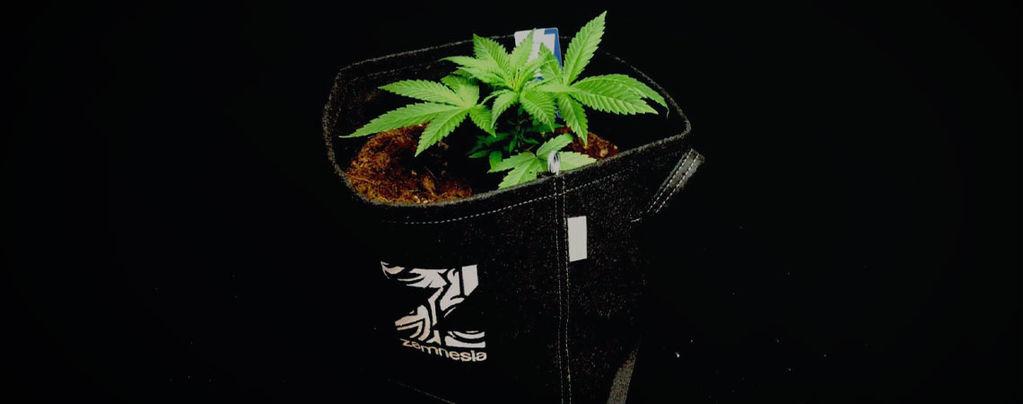 Ventajas De Las Macetas De Tela Para Cultivar Marihuana
