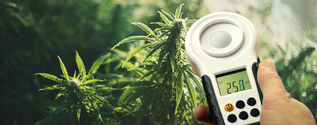 Cómo Aumentar La Cosecha De Marihuana Usando Un Luxómetro